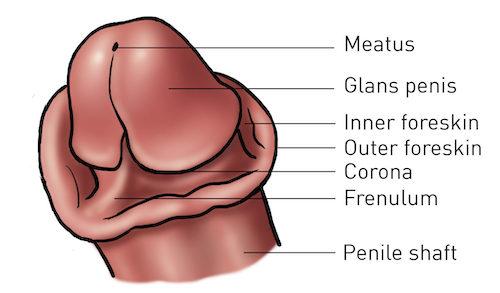 Circumcision, Circumcision, Full Body Massage Service
