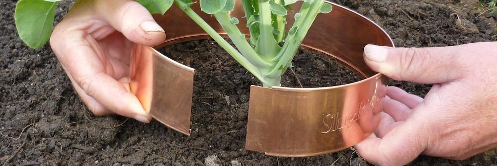 Slugs Gardening Tip, Slugs ~ Gardening Tip, Full Body Massage Service